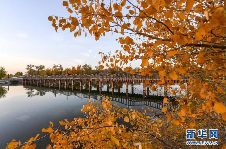 深秋时节,地处叶尔羌河流域的新疆巴楚县秋意正浓,一幅色彩斑斓图片